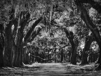 Photograph - South Carolina Plantation Road 001 Bw by Lance Vaughn