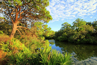 Photograph - South Creek Near Nokomis, Southwest Florida, United States by Gary Corbett