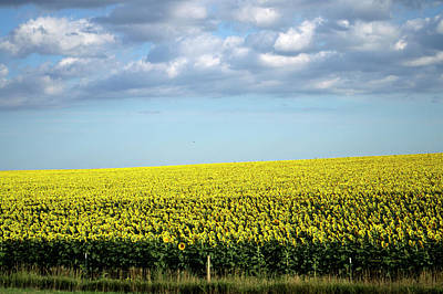 Fluffy Clouds Mixed Media - South Dakota August Clouds With Sunflower Field by Thomas Woolworth