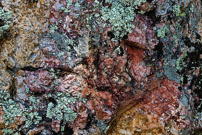 Ira Marcus Royalty-Free and Rights-Managed Images - South Dakota Lichen by Ira Marcus