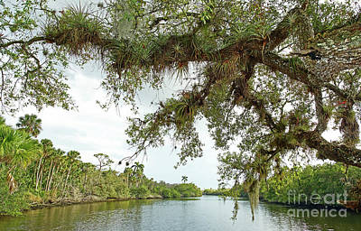 Photograph - South Fork Of The Saint Lucie River by Larry Nieland