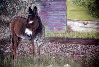 Pastel - South Georgia Mule by Jan Amiss