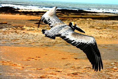 South Padre Pelican Art Print by Laurie Prentice