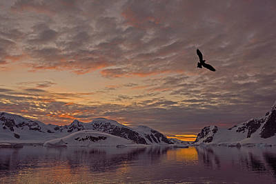 Photograph - South Polar Dusk by Tony Beck
