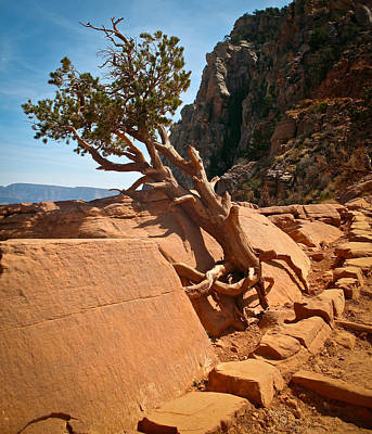 Photograph - South Rim Kalib Trail by Kathleen Scanlan