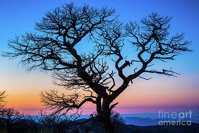 Photograph - South Rim Tree by Inge Johnsson
