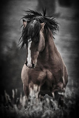 Forelock Photograph - South Steens Wild Stallion D4306 by Wes and Dotty Weber
