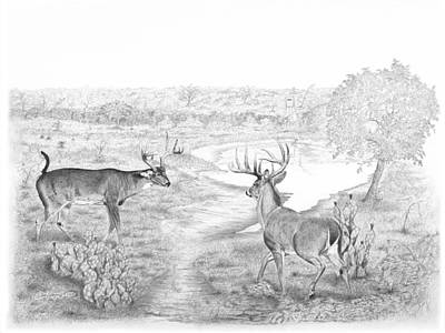 South Texas Stand Off Art Print by Steve Maynard