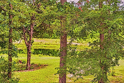 Photograph - South Texas Trees by Nancy Marie Ricketts