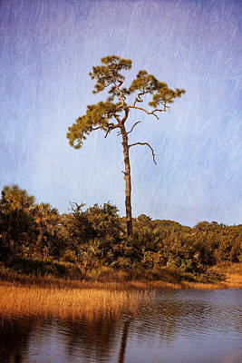 Photograph - South Wetlands Preserve by Kim Hojnacki