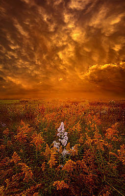 Photograph - South Wind by Phil Koch