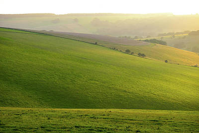 Photograph - South Downs Light by Will Gudgeon
