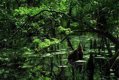 Photograph - Southeast Texas Swamp 1 by Travis Burgess
