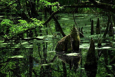 Photograph - Southeast Texas Swamp 2 by Travis Burgess