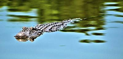 Photograph - Southern Alligator by James Potts