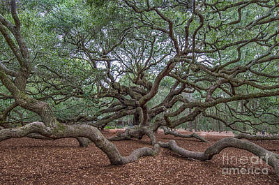 Photograph - Southern Angel Oak Tree Near Charleston South Carolina  by Dale Powell
