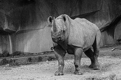 Photograph - Southern Black Rhinoceros - Black And White by Susan McMenamin