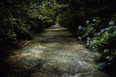 Photograph - Southern Blue by Jessica Brawley