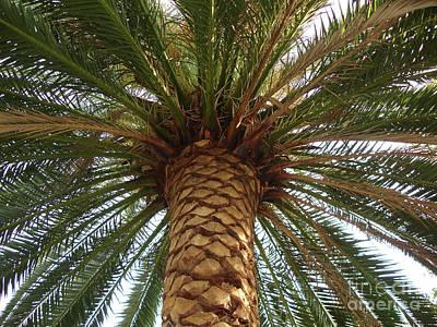 Southern California's Palm Art Print