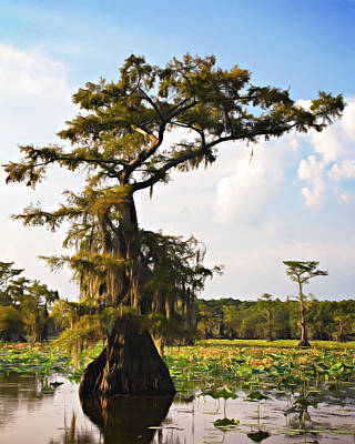 Photograph - Southern Canapoy  by Lana Trussell