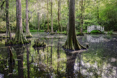 Photograph - Southern Charm by Michael Donahue