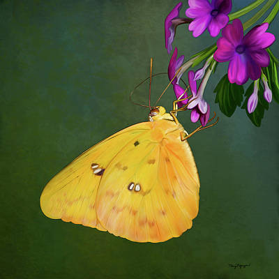 Southern Dogface Butterfly Art Print by Thanh Thuy Nguyen