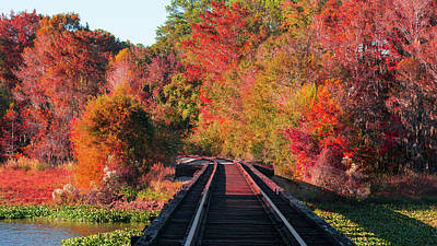 Photograph - Southern Fall by RC Pics