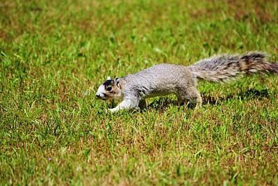 Photograph - Southern Fox Squirrel by Cynthia Guinn