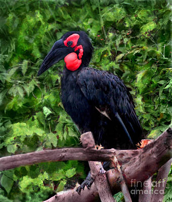 Southern Ground Hornbill Original by Sergey Lukashin