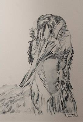 Hornbill Drawing - Southern Ground Hornbill by Yuanitha Du Plessis