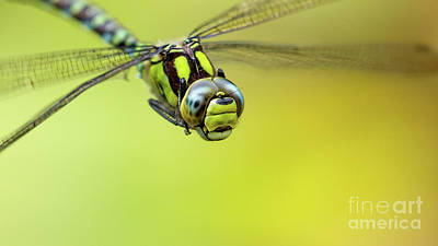 Photograph - Southern Hawker 2 by Andy Brown