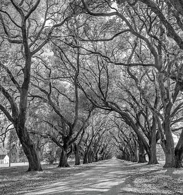 Laneway Photograph - Southern Lane 3 Bw by Steve Harrington