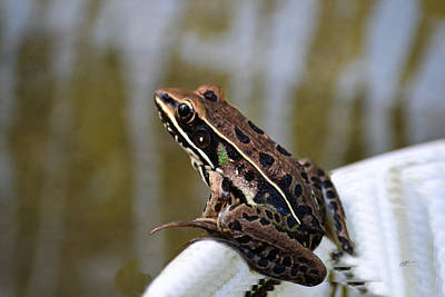 Photograph - Southern Leopard Frog - Lithobates Sphenocephalus by rd Erickson