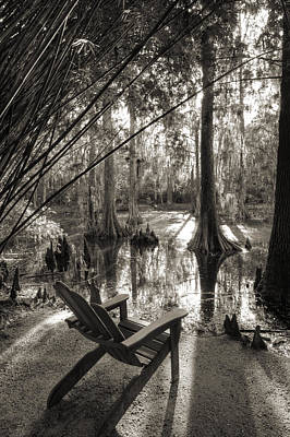 Bamboo Photograph - Southern Living by Dustin K Ryan