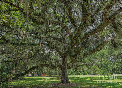 Photograph - Southern Magic Live Oak Tree Dripping With Spanish Moss by Dale Powell