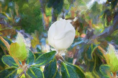 Photograph - Southern Magnolia Blossom Magnolia Grandiflora 002 by Rich Franco
