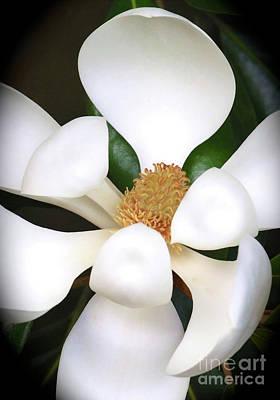 Southern Magnolia Cameo Art Print