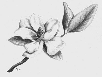 Drawing - Southern Magnolia by Mary Rogers