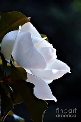 Photograph - Southern Magnolia Profile by Patti Whitten