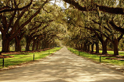 Photograph - Southern Mansion Mall With Live Oaks by Douglas Barnett