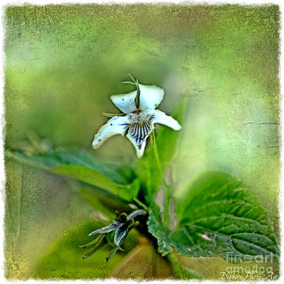 Photograph - Southern Missouri Wildflowers 6 by Debbie Portwood