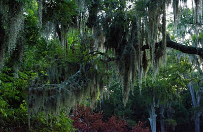 Photograph - Southern Moss by Tikvah's Hope