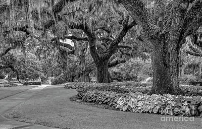 Photograph - Southern Oaks In Black And White by Kathy Baccari