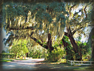 Photograph - Southern Pathway by Joan  Minchak