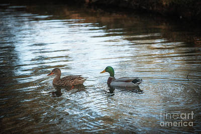 Photograph - Southern Plantation Ducks by Dale Powell