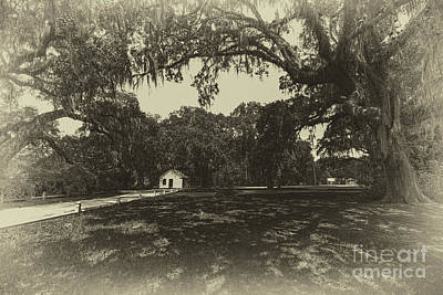 Photograph - Southern Plantation Path by Dale Powell