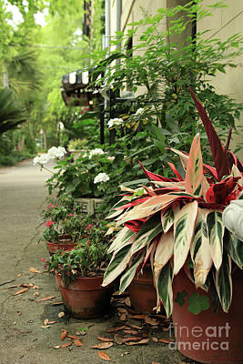 Photograph - Southern Planters by Heather Green