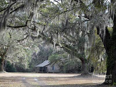 Al Powell Photograph - Southern Shade by Al Powell Photography USA