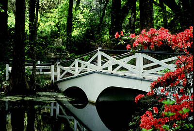 Photograph - Southern Splendor by Gary Wonning