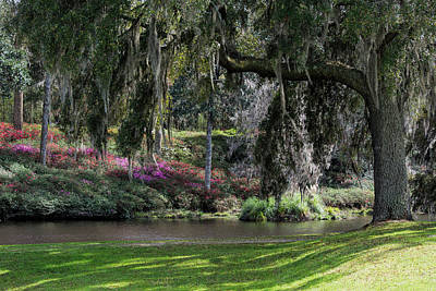Photograph - Southern Spring by Ed Waldrop